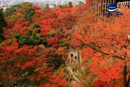 Lưu ý khi chọn tour Nhật Bản - ảnh 1