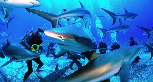 Du khách tránh đeo trang sức sáng bóng khi lặn, khiến cá mập lầm tưởng là các loài cá có vảy hoặc dùng mồi nhử để các con vật tới gần mình, luôn giữ khoảng cách với chúng. Ảnh: Escaping Elegance.