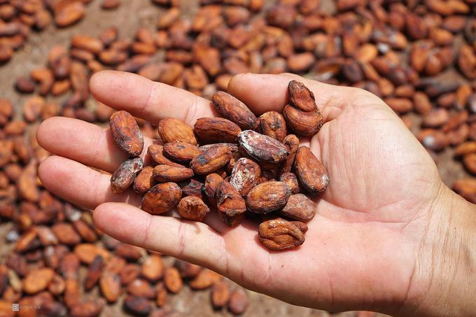 Trải nghiệm làm cacao hút khách ở miền Tây