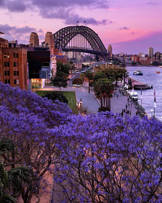 Hoa xuân bung nở trên khắp Australia