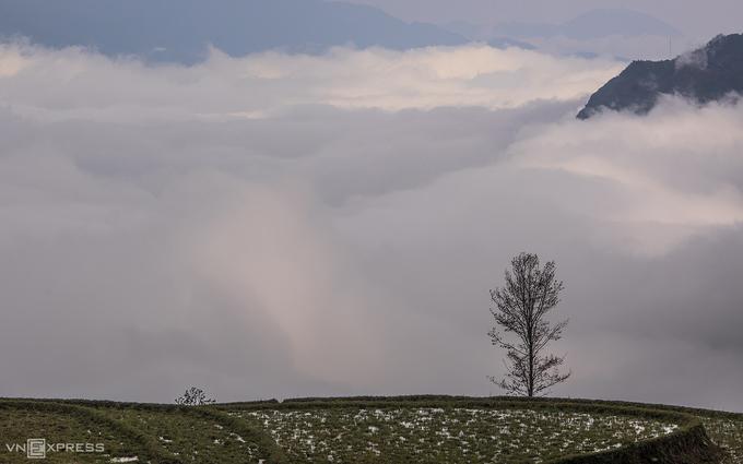 Y Tý mùa săn mây