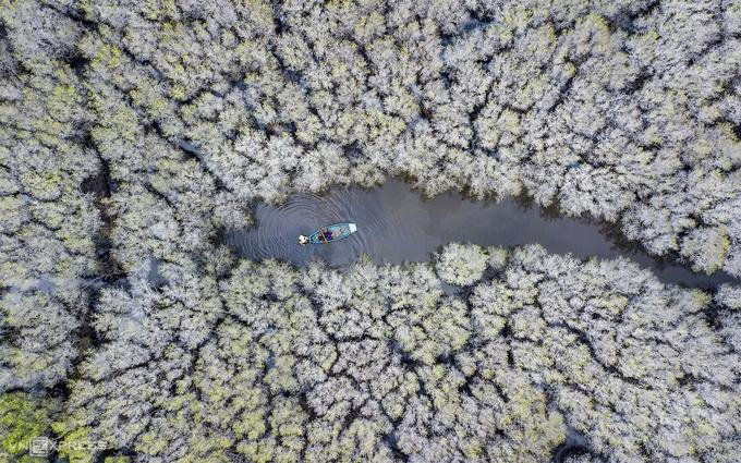 Rừng bàu Cá Cái chuyển sắc trắng trong mùa thu