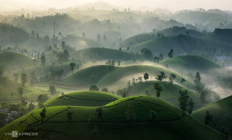 Чайные плантации Лонг-Кок (Фото)