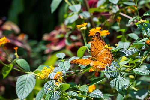 Khu vườn bươm bướm ở Kuala Lumpur. Ảnh: Scottgunn/Flickr.