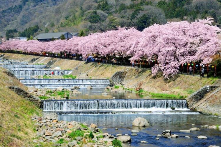 Trải nghiệm văn hóa Nhật tại lễ hội Kanagawa - ảnh 1