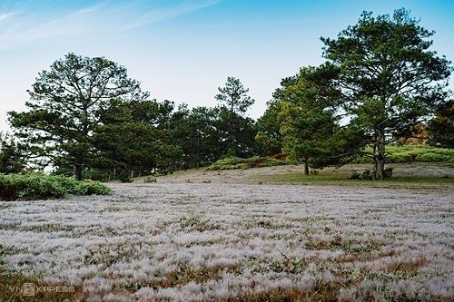 Thời điểm đồi cỏ hồng đẹp nhất để ngắm nhìn và chụp ảnh là từ lúc mặt trời vừa ló dạng đến khoảng một giờ sau. Ảnh: Van Nguyen Ngo.