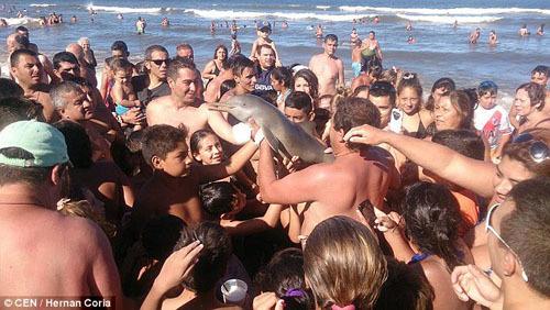 Một sự cố tương tựxảy ra hồi tháng 2/2016, khi các du khách tại bãi biển thuộc thành phố Buenos Aires (Argentina) lôi một con cá heo lên mặt nước để chụp ảnh. Ảnh: CEN.