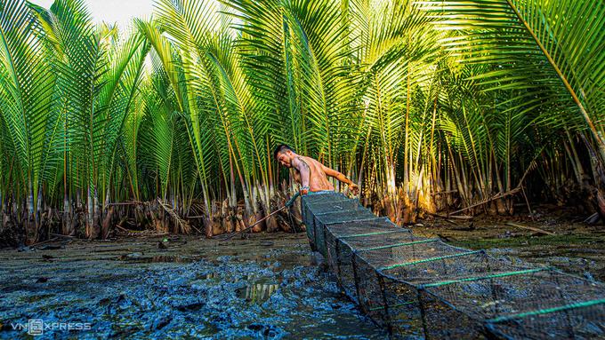 Rừng dừa nước nằm ngay bờ biển Mỹ Khê