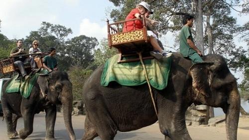 Những con voi phục vụ du khách trong công viên khảo cổ Angkor. Ảnh:Tang Chhin Sothy/AFP.