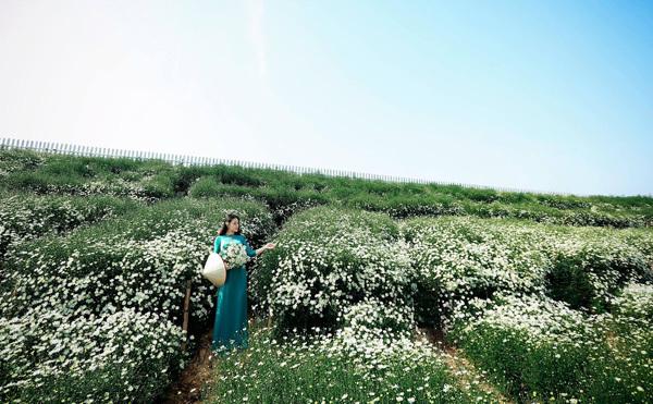 Đến với cúc họa mi, các bạn trẻ có thể lựa chọn cho mình nhiều phong cách chụp ảnh đa dạng để có những bức hình ưng ý như diện áo dài trắng, trang phục dễ thương, đáng yêu, thôn nữ... Dù bạn lựa chọn phong cách nào, cũng sẽ vẫn nổi bật trên nền trắng muốt của hoa.