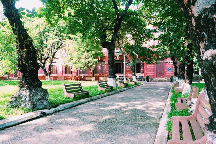Khuôn viên sân trường có nhiều cây cổ thụ cao rợp bóng, tạo không khí mát mẻ ngay cả trong những ngày hè nóng bức. Ảnh: Nguyễn Hoàng Hà