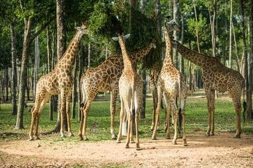 Rừng nguyên sinh xanh mát là nơi sinh sống của nhiều loài động vật kỳ thú.