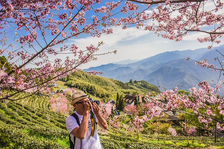 Đài Loan còn thu hút du khách bởi sắc hoa anh đào.