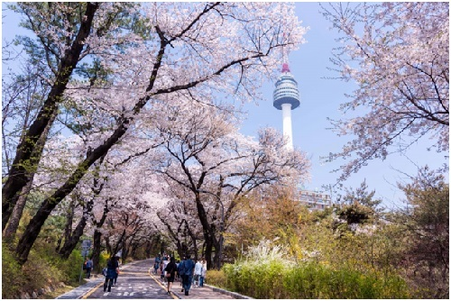 BenThanh Tourist giới thiệu tour ngắm hoa xuân Hàn Quốc - ảnh 2