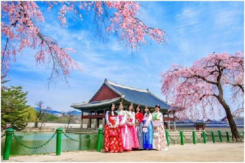 BenThanh Tourist giới thiệu tour ngắm hoa xuân Hàn Quốc - ảnh 1