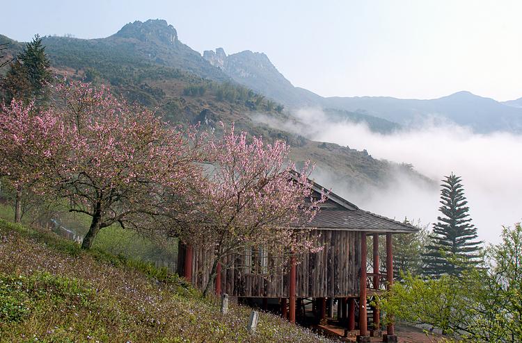 Hoa đào nở trong các thung lũng ở Sa Pa. Ảnh: Thi/Shutterstock.