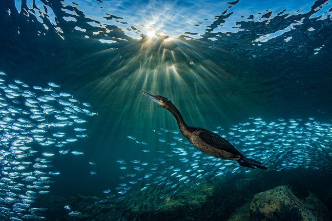 10 ảnh đoạt giải cuộc thi chụp dưới nước