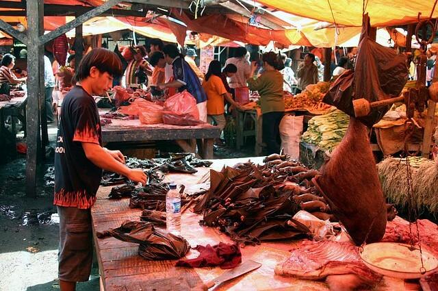 Chợ dơi giữa dịch nCoV - ảnh 1