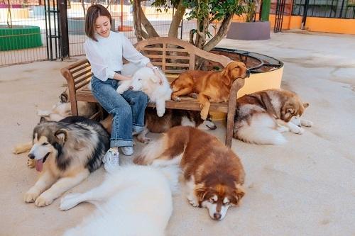 Nông Trại Cún - Puppy Farm có hơn 40 loại chó cảnh khác nhau, du khách có thể đến thăm và chơi đùa cùng các chú cún cưng.  Tại nông trại còn có không gian đồi hoa, vườn dâu với nhiều chủng đa dạng như: dâu chuối, dâu Hàn Quốc, dâu Monterey, dâu Nhật, dâu Anh Đào, dâu Bạch Tuyết...