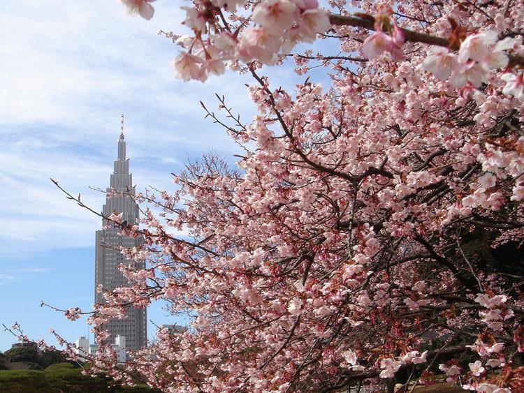 Ngoài 1.3000 cây anh đào là điểm nhấn, công viên còn thu hút du khách với những bãi cỏ lớn cùng nhiều lối đi bộ. Tại đây có vườn Anh, Pháp và Nhật Bản. Nơi đẹp nhất để bạn tổ chức một buổi dã ngoại là vườn Anh tại công viên, theo chỉ dẫn của nhiều du khách. Công viên còn có một số giống anh đào, nở chậm hơn các giống anh đào còn lại. Do đó, bạn có thể tìm đến đây để ngắm hoa cuối mùa, nếu đã bỏ lỡ kỳ ngắm hoa trong mùa cao điểm mọi năm. Ảnh: Coisas do Japao/Pinterest.