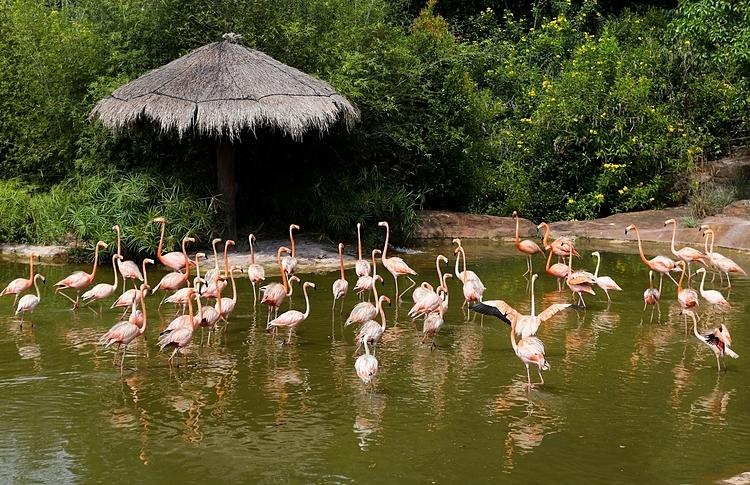 Khu bảo tồn có hơn 3.000 cá thể, thuộc 150 loài đến từ các vùng như Nam Phi, châu Âu, Australia, Mỹ... Ảnh: Quỳnh Trần.