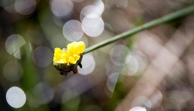 Mùa hoa hoàng đầu ấn