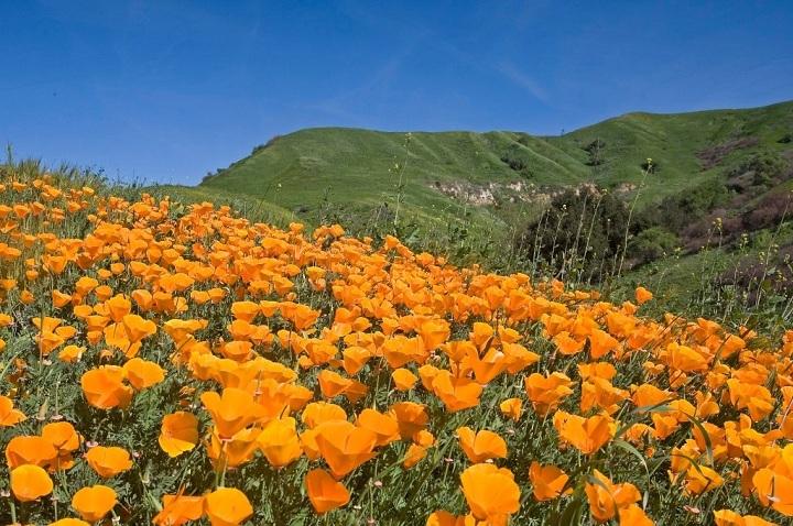 Khách du lịch đến thành phố nhỏ này có thể trải nghiệm nhiều hoạt động ngoài trời bởi tổng diện tích các công viên lên tới hơn 159 hecta. Công viên Chino Hills là một nơi đáng ghé thăm, với 38 đường mòn để du khách đi bộ, chạy, đạp xe trên núi... Nếu muốn cắm trại, du khách chỉ cần chi 30 USD cho một đêm, tối đa 8 người một khu. Công viên nằm ngay trên đồi Chino, dưới chân dãy Santa Ana, cách trung tâm thành phố khoảng 16 km về phía tây bắc. Ảnh: Southern California Hiking Trails.