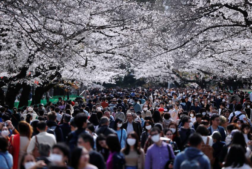 Khách tham quantrong công viên Ueno vào ngày 22/3. Công viên Ueno là nơi nổi tiếng nhất tại Tokyotrong mùa hoa anh đào. Ảnh:Issei Kato/Reuters.