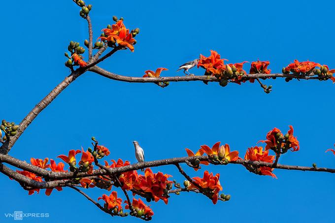 Những mùa hoa bị bỏ lỡ
