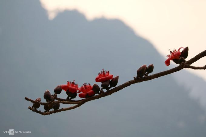 Mùa hoa nở trên cao nguyên đá
