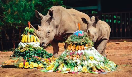 Trước đó, vào tháng 4/2019, Vinpearl Safari Phú Quốc cũng chào đón 2 tê giác con tên Hakuna Matata và Cà phê.