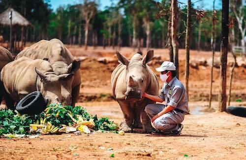 Gần một năm sau, Matata và Cà phê đã phát triển khoẻ mạnh, thường xuyên được các y bác sĩ và nhân viên chăm sóc động vật hoang dã chăm sóc. Hakuna Matata và Cà phê đạt trọng lượng 600 - 700 kg, dự kiến sẽ nhanh chóng chạm kích cỡ trưởng thành khi ở độ tuổi 3-5 tuổi của tê giác.