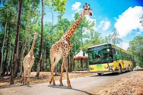 Vinpearl Safari có 3 cơ sở tại Phú Quốc, Nha Trang và Nam Hội An với 2 mô hình: Safari - công viên bán hoang dã và river safari - công viên du khảo trên sông. Toàn hệ thống Vinpearl Safari đang nuôi dưỡng 655 cá thể động vật sơ sinh, chăm sóc và bảo tồn gần 5.000 cá thể thuộc hơn 250 loài. Tháng 11/2019, Vinpearl Safari nhận chứng chỉ về đảm bảo điều kiện phúc trạng động vật của Hiệp Hội vườn thú Đông Nam Á - SEAZA Welfare Cercitification.