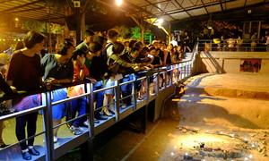 Hà Nội tổ chức lễ hội du lịch và văn hóa ẩm thực
